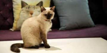 متحرش القطط